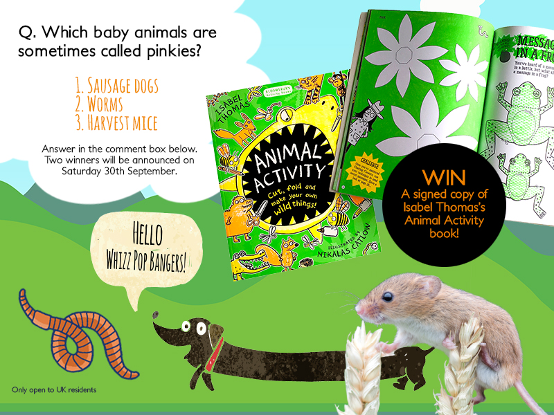 September competition Isabel Thomas Animal Activity
