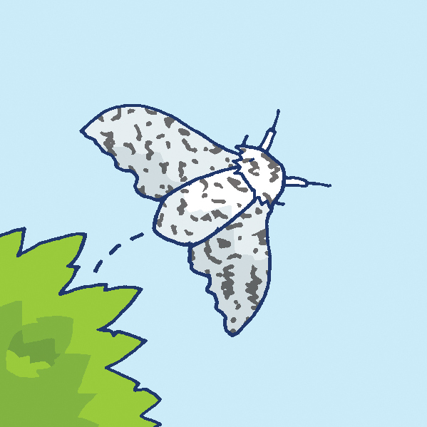 Illustration of a peppered moth