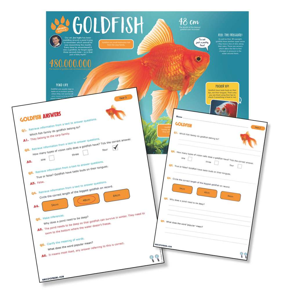 A non-chronological report on goldfish