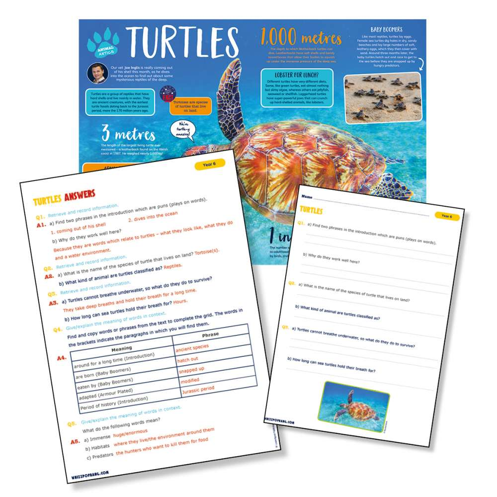A non-chronological report on turtles