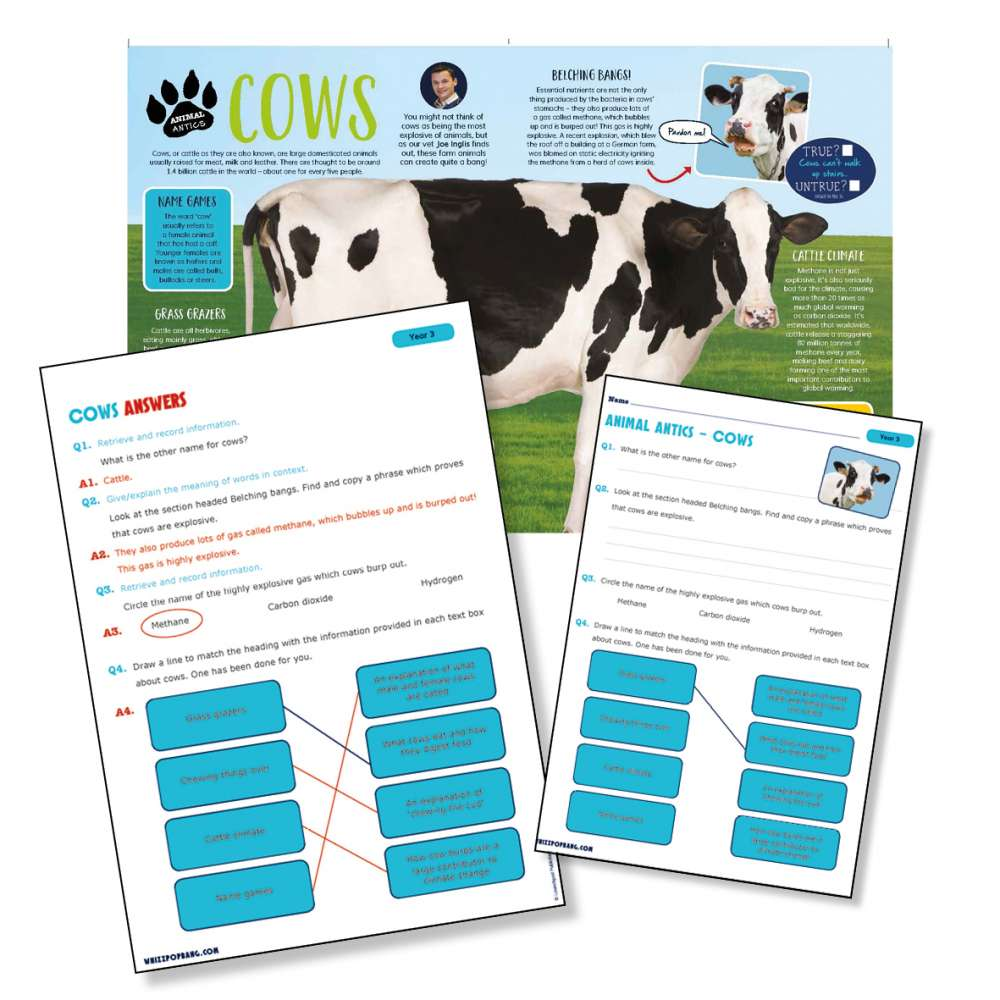 A non-chronological report on cows