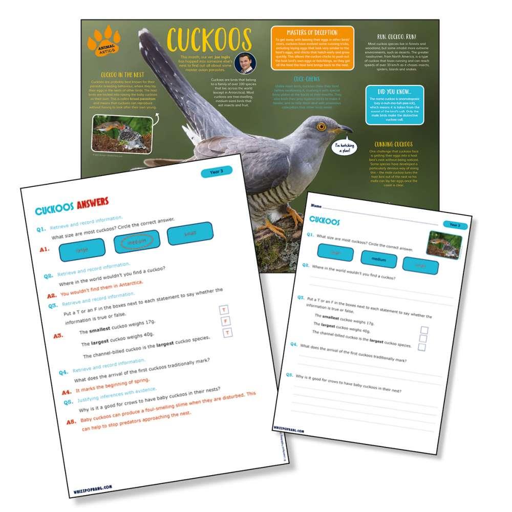 A non-chronological report on cuckoos