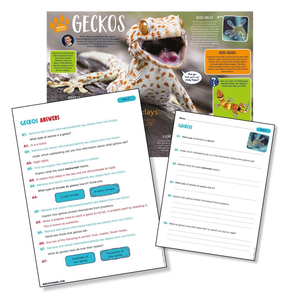 A non-chronological report on geckos
