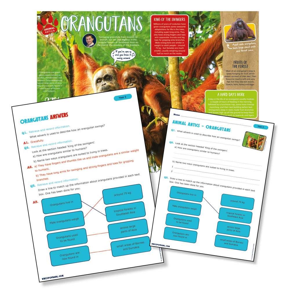 A non-chronological report on orangutans