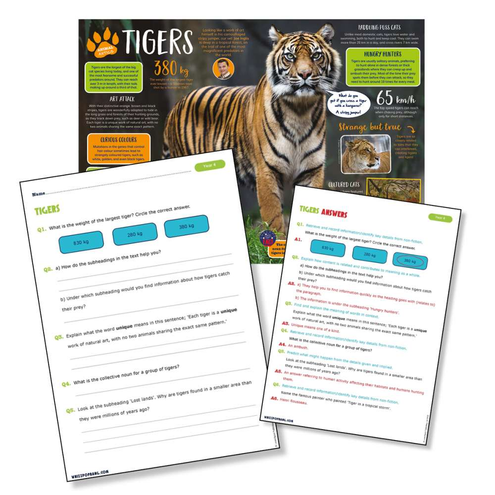 A non-chronological report on tigers