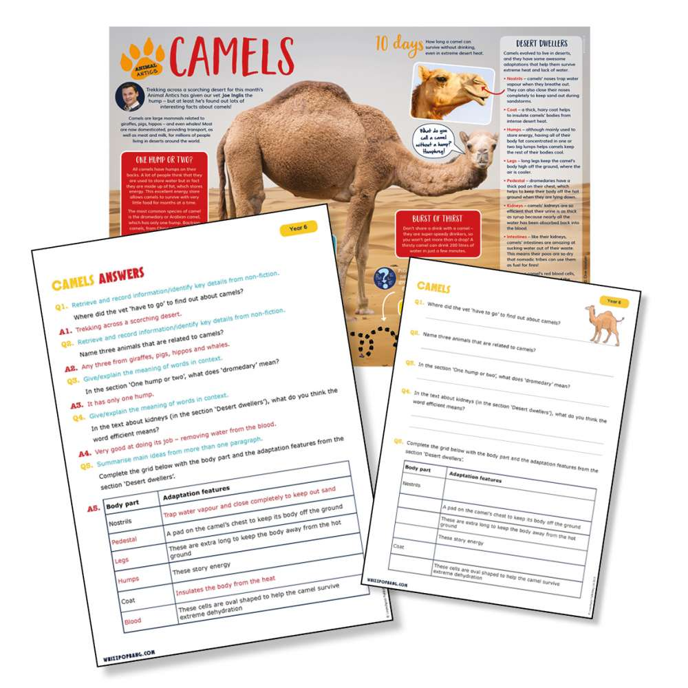 A non-chronological report on camels