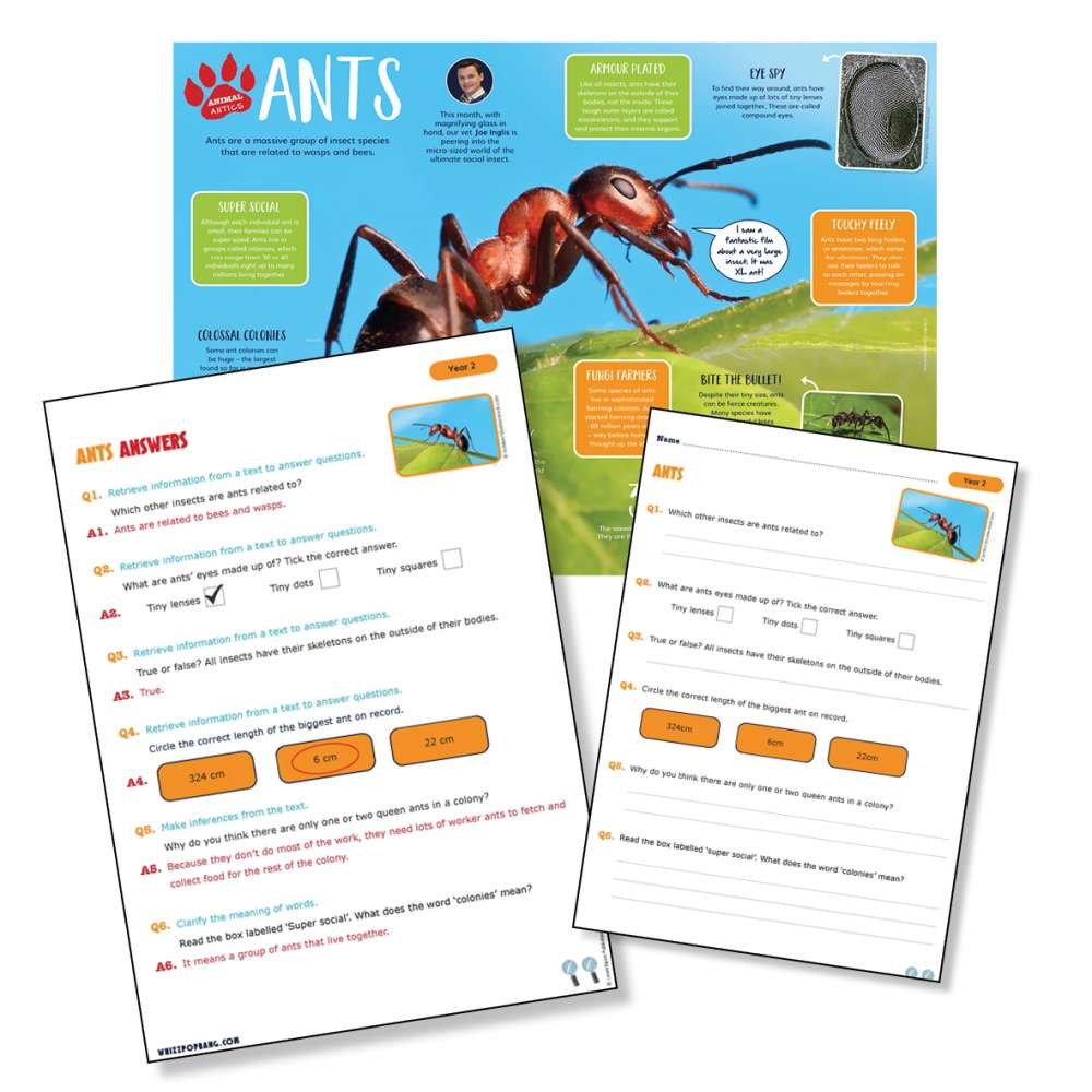 A non-chronological report on ants